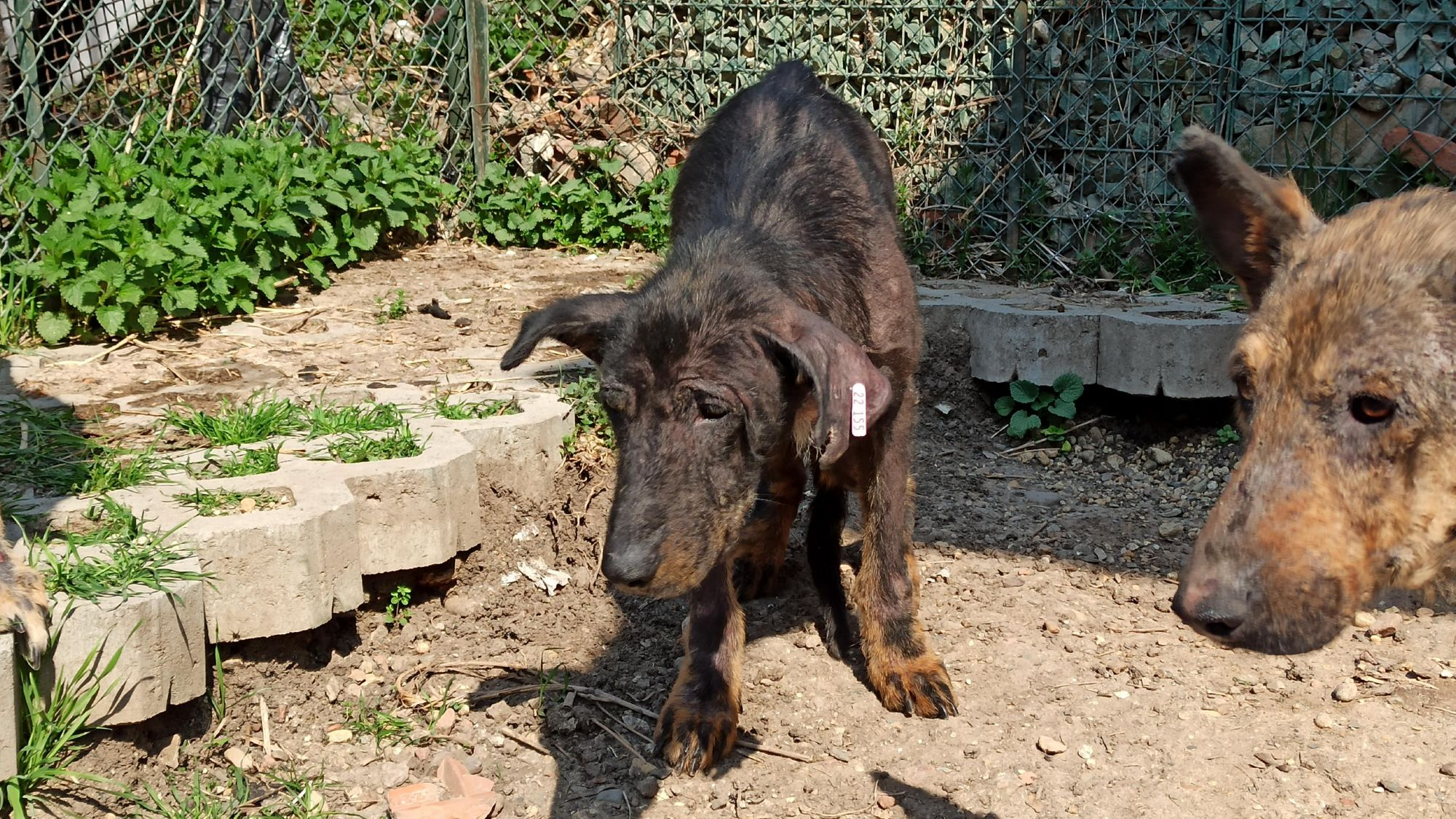 Dog Kovi cowers in fear