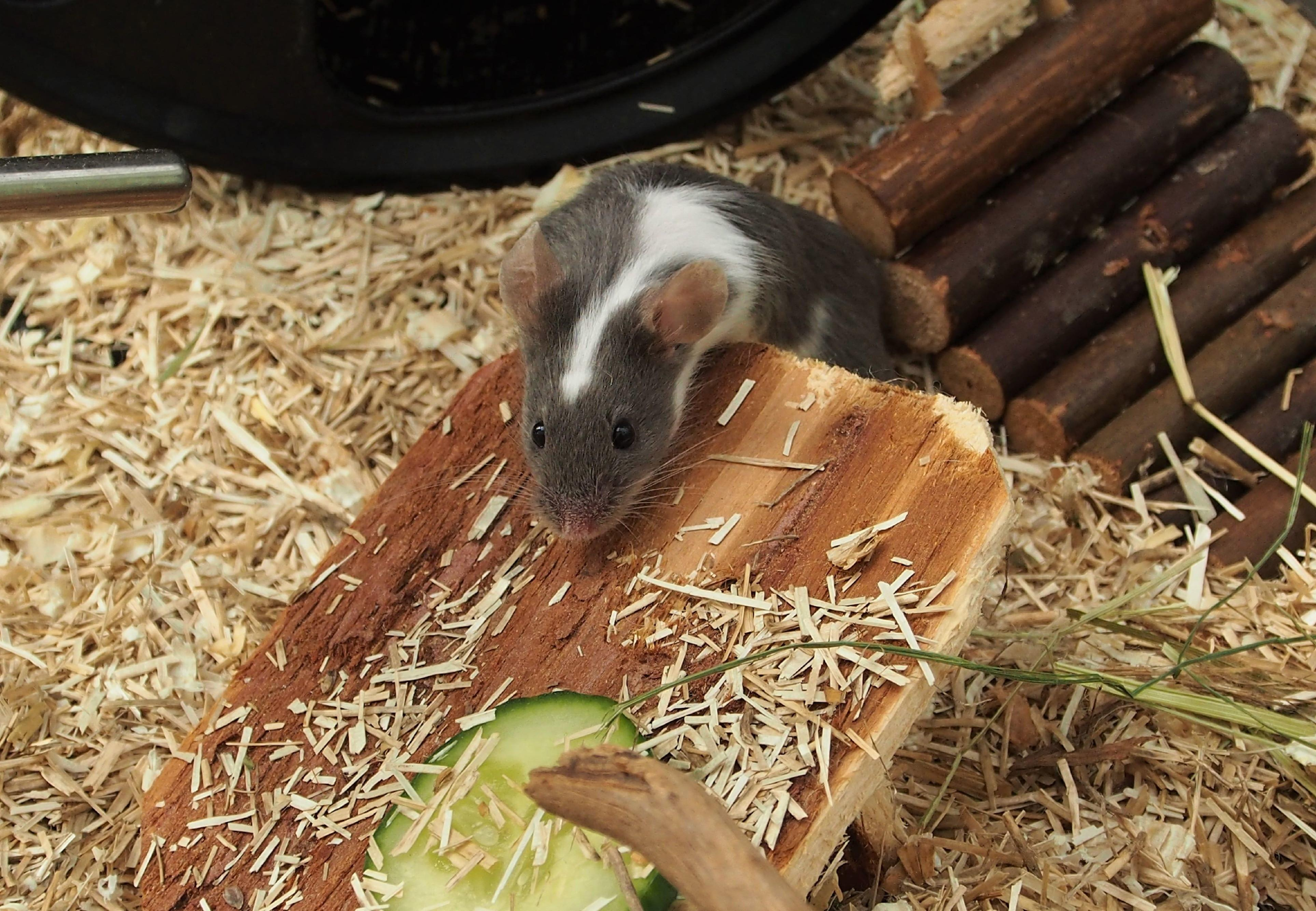 Best design for a mice habitat