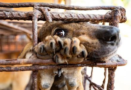 Dog Meat Slaughterhouse in Cambodia