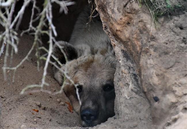 Bear Luna at BEAR SANCTUARY Mueritz