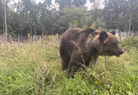 Bear Ruta