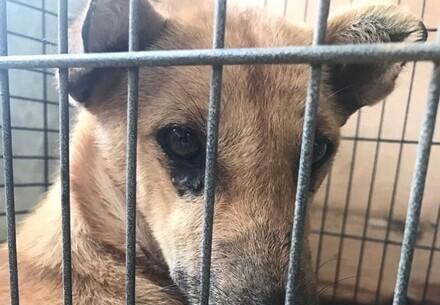 Cinta a échappé au commerce de viande et de chien en Asie