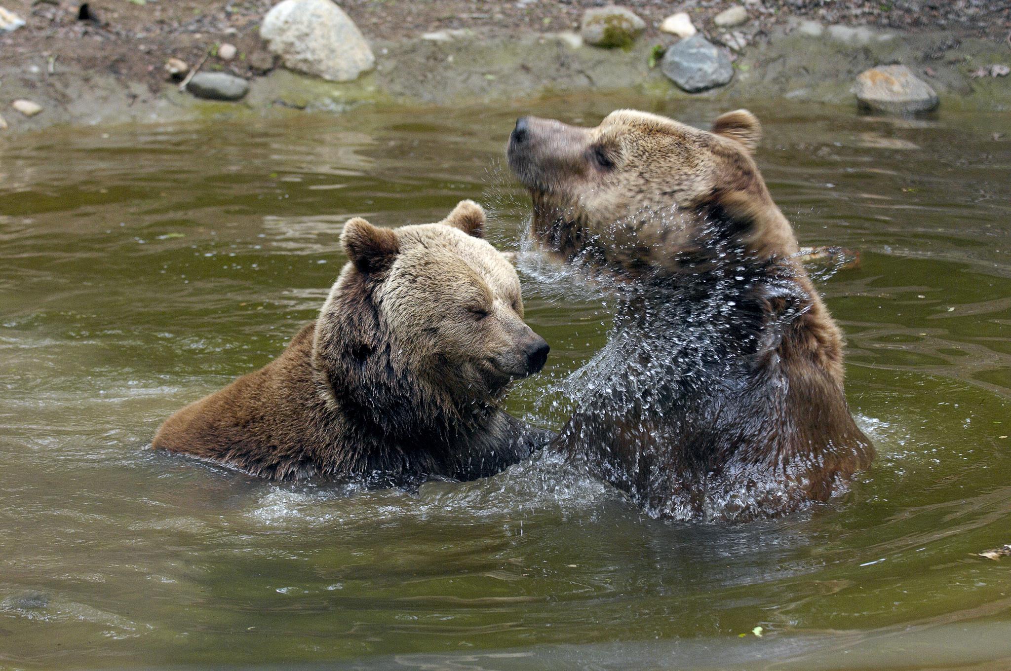 Lothar und Sindi spielten gerne im Wasser