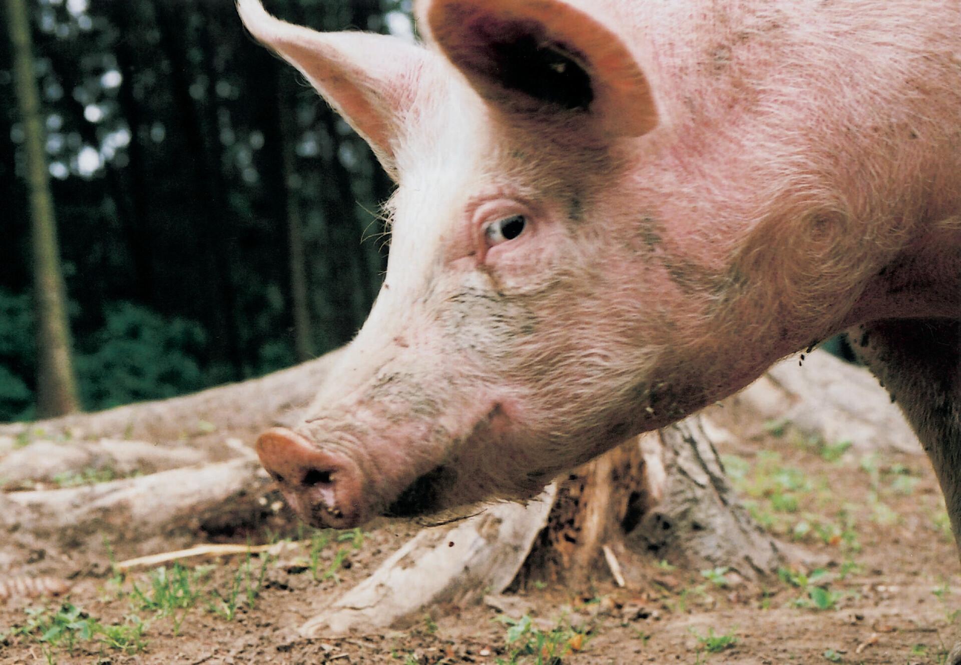 Tierschutz im Wahlkampf Kampagnen & Themen VIER PFOTEN