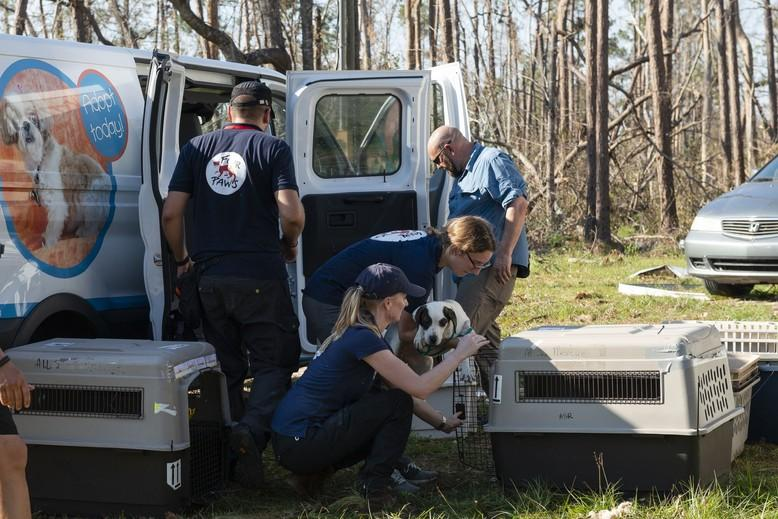 The team help animals in need after a hurricane