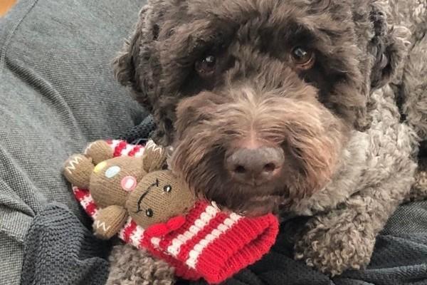 Hund Bosco