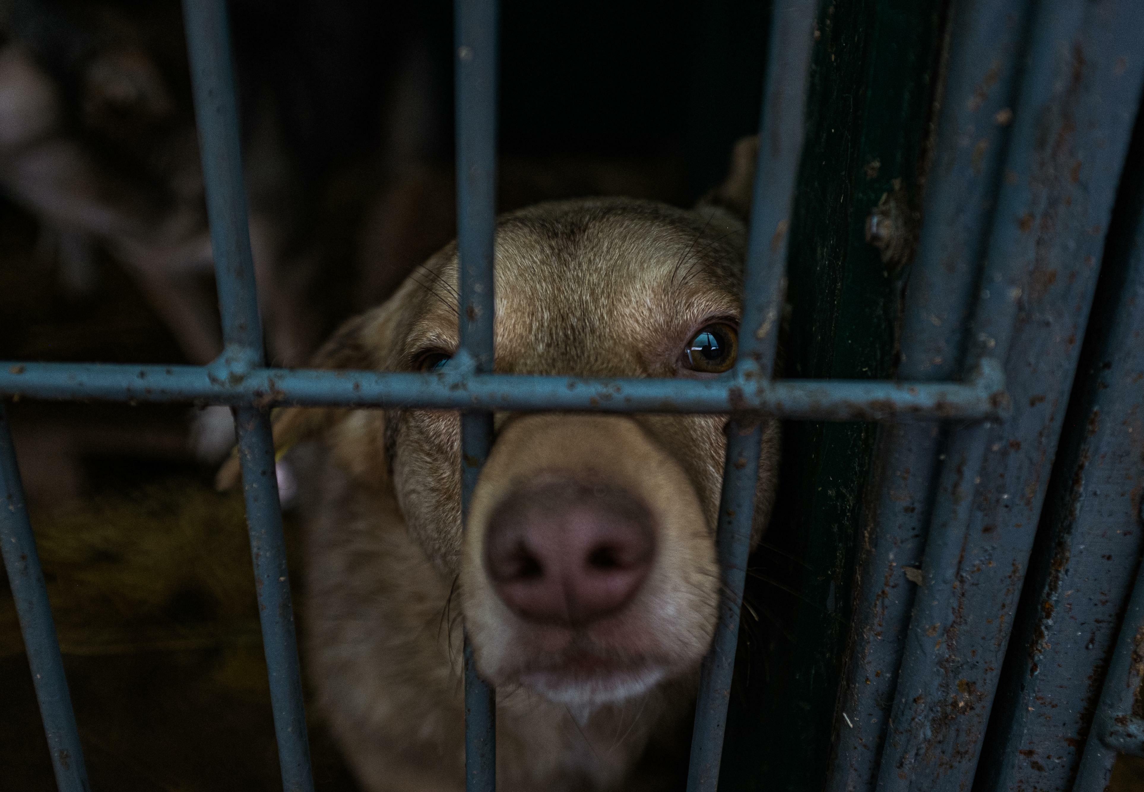 Hund in öffentlichem Tierheim in Chisinau