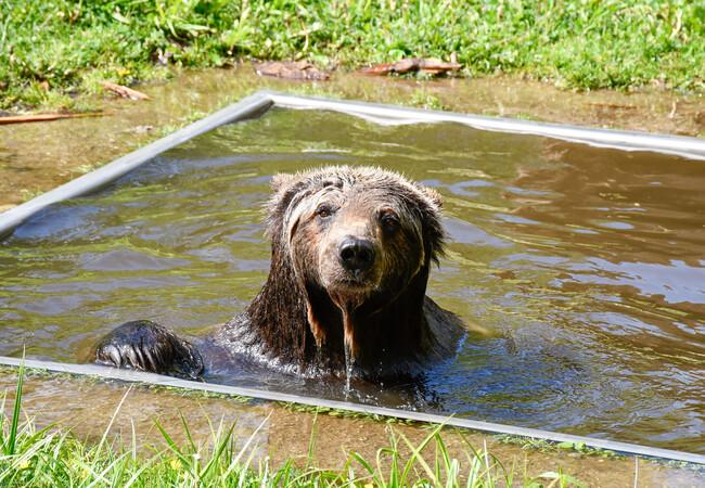 Sylvia is taking a bath