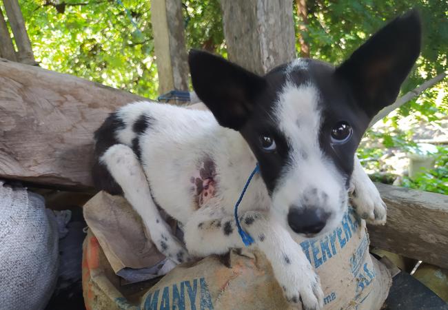 Puppy saved