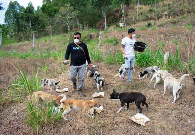street dogs feeding program in Bali