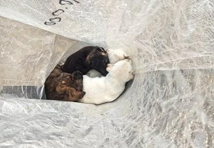 The four puppies in a bag