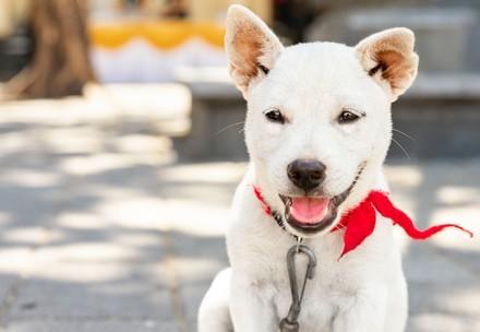 En indonésie, QUATRE PATTES et Program Dharma sauvent les vies de chiens et de chats errants