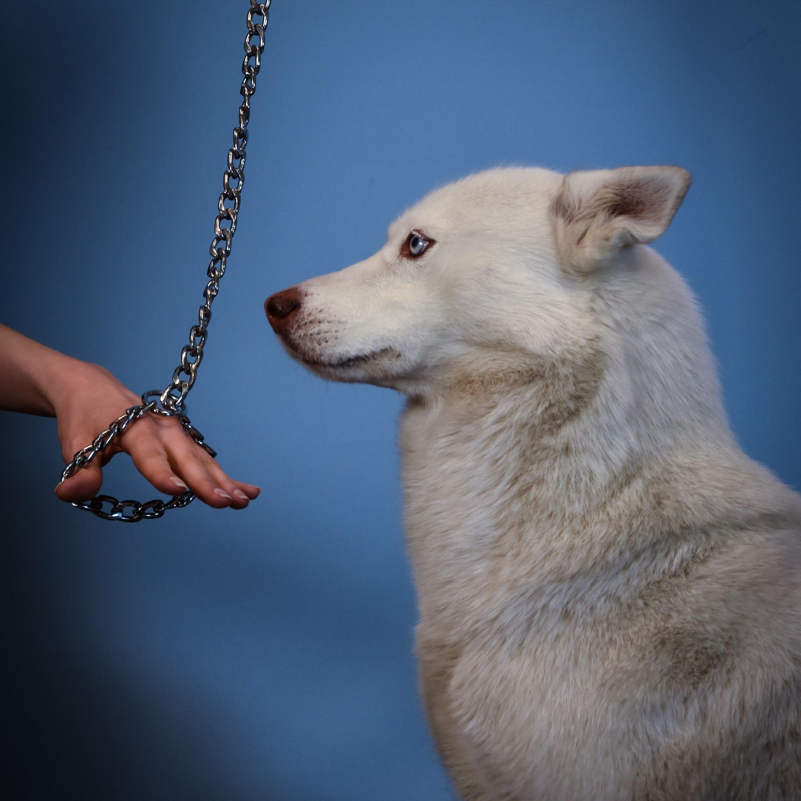 Würgehalsbänder sind für die Hunde gefährlich. (c) VIER PFOTEN