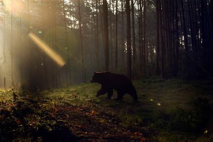 Bär Kasia im Bärenwald Müritz