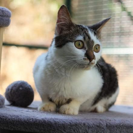 коте Марион (cat Marion)