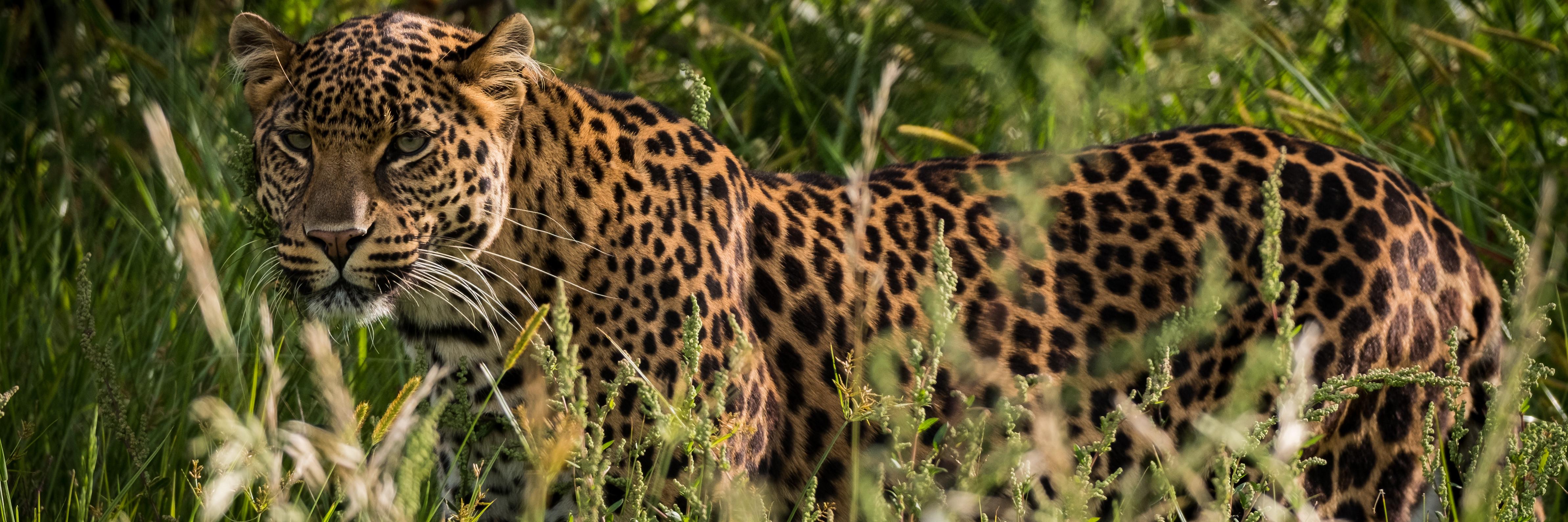 Leopard Bakari