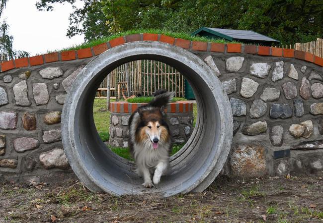 Hundebesuch im BÄRENWALD