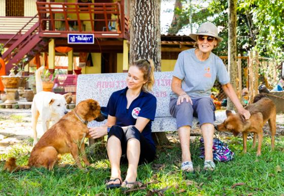 Streunerhunde werden in Thailand betreut