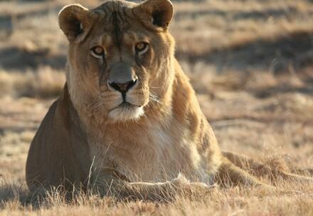 Lion Pregan at LIONSROCK