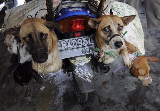 Hunde in einem Hundeschlachthaus