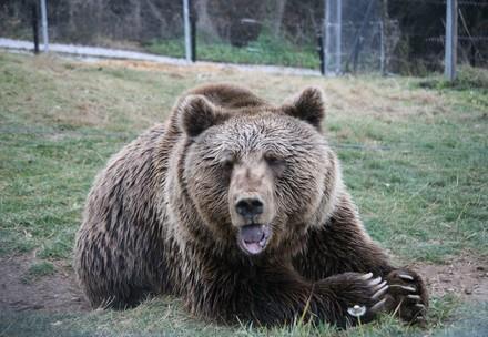Bear Stivi sitting in the grass