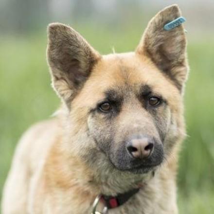 Dog Djino