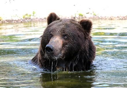 Bear Ruta taking a bath