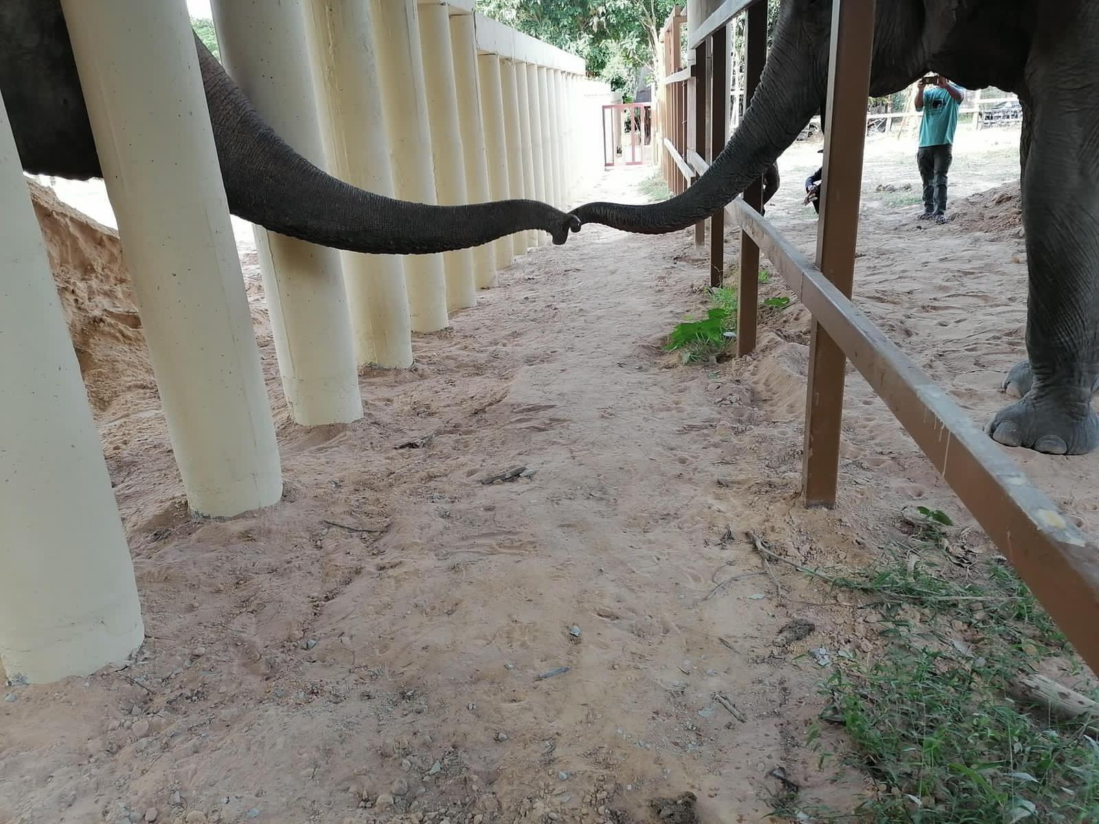Kaavan interacts with another elephant after years of isolation