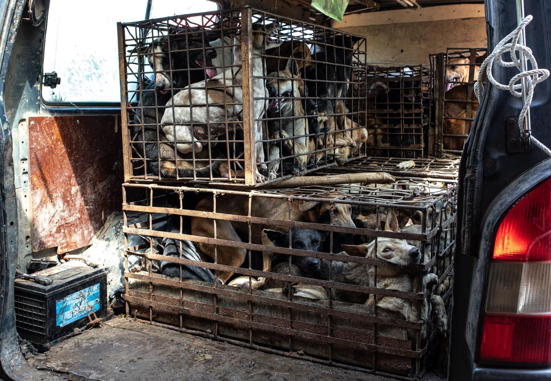 Les animaux sont transportés dans des conditions épouvantables