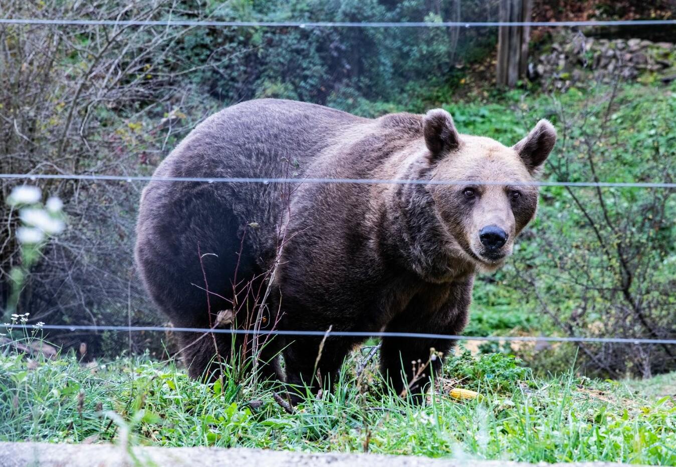 Blije beren in BERENWOUD Ninh iInh