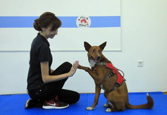 AAI dog in straining