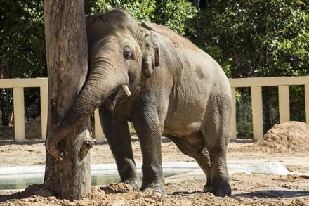 kavaan against tree trunk