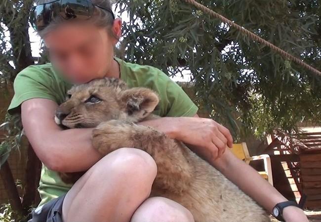 Cuddle a lion cub