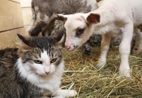 Martisor rencontre un chat de ferme