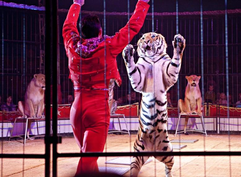 Animals in circuses suffer under continuous stress.