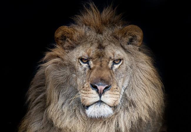 Leeuw Ivan-Asen in 2020