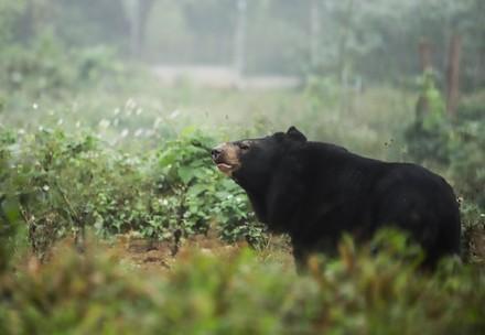 Rescued bear in Vietnam