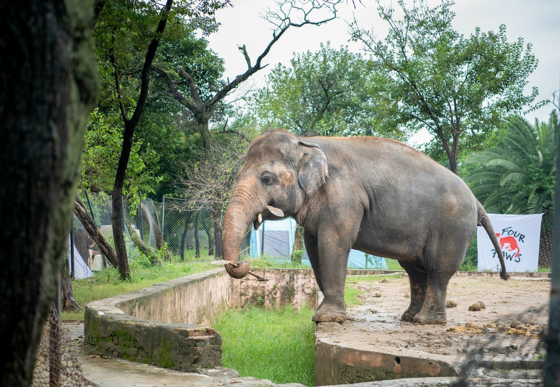 Pakistans letzter Asiatischer Elefant zieht Ende November nach Kambodscha