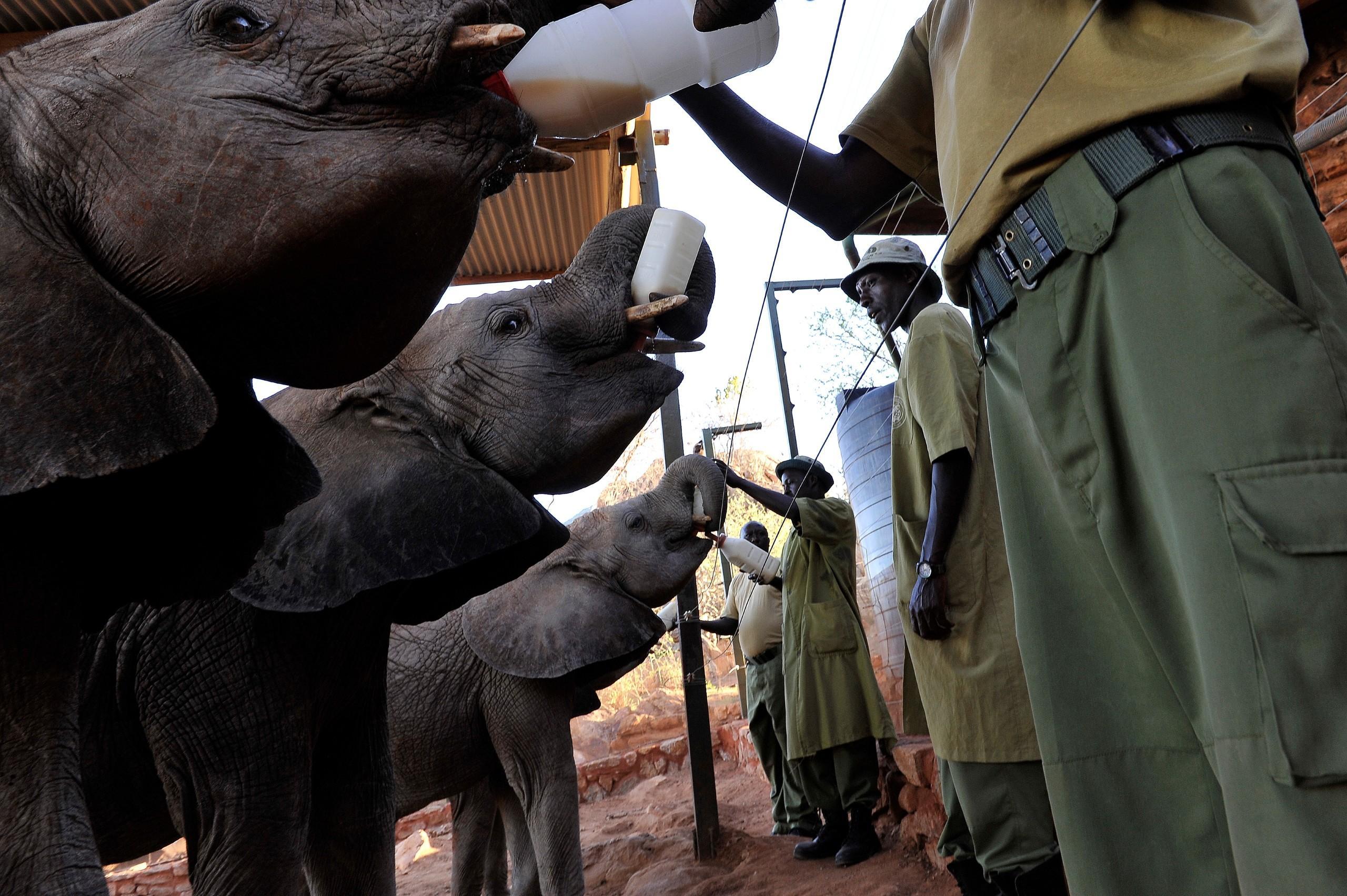 helping elephants