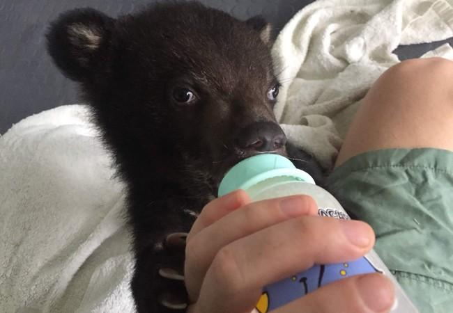 Bear cub Mochi with drinking bottle