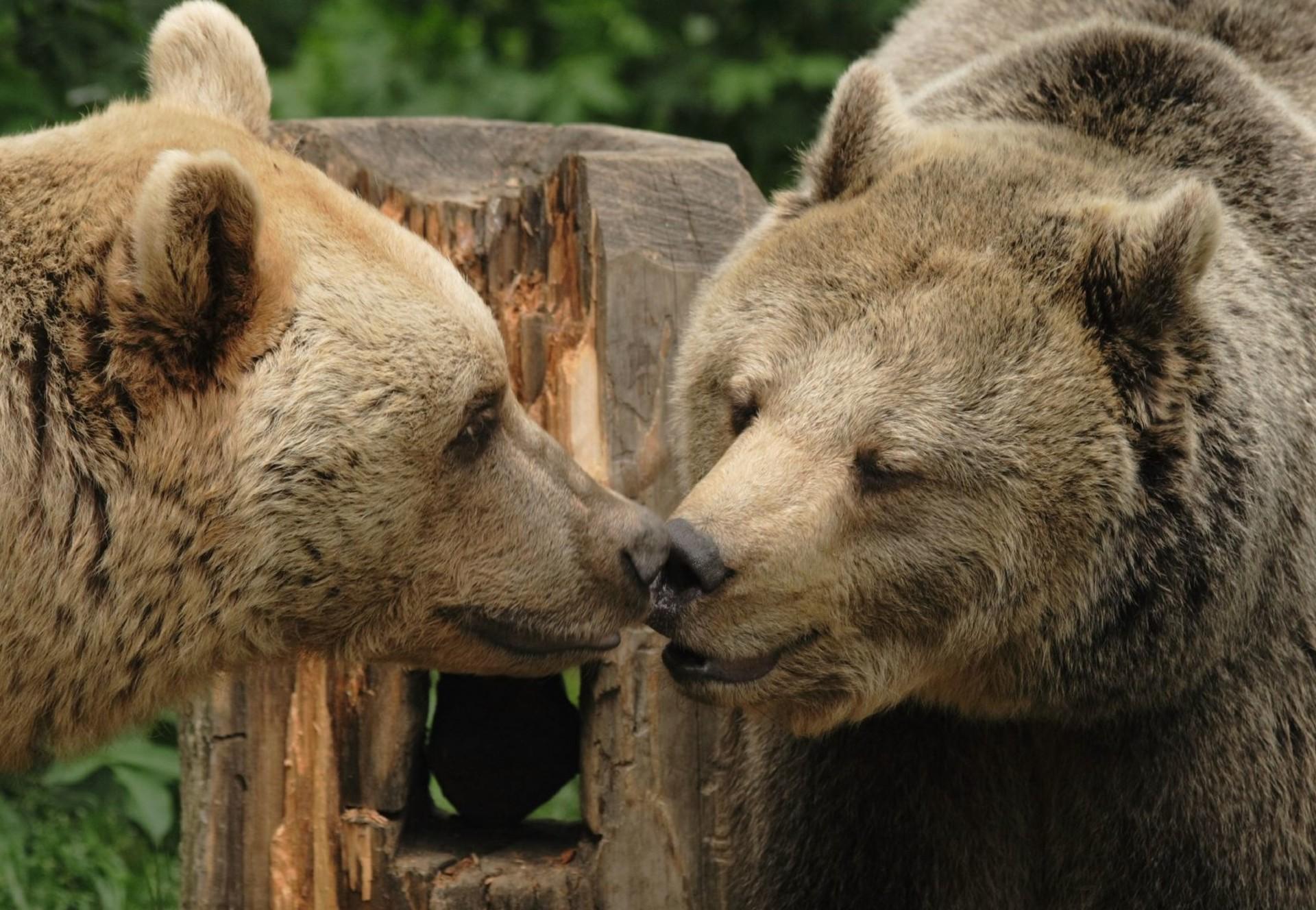 Bären im Bärenwald Arbesbach