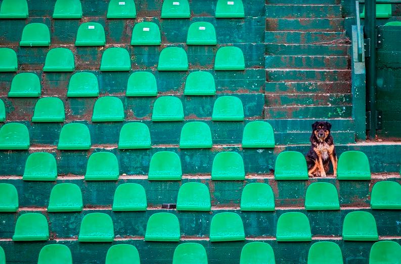 Самотно куче на скамейката