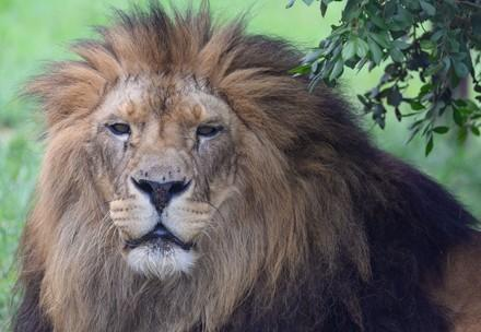 Big cats need our help!