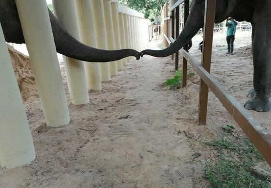 Kaavan's interaction with another elephant
