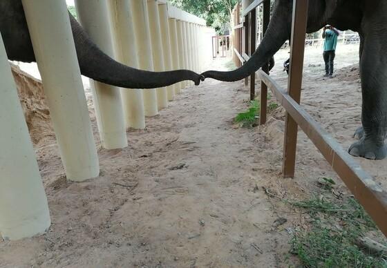 Kaavan's interactie met een andere olifant