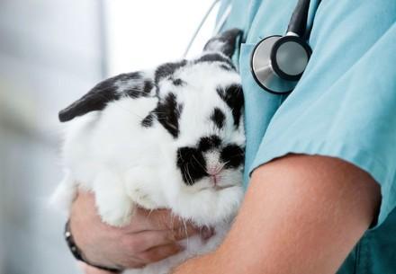 Kaninchen beim Arzt