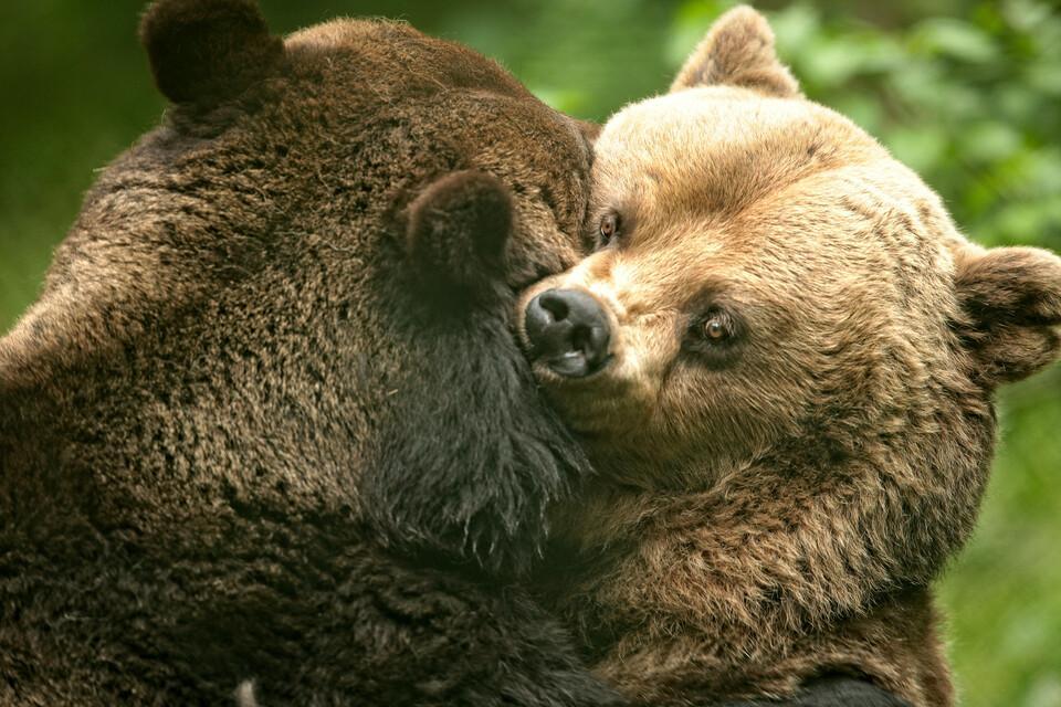 Unsere Bären