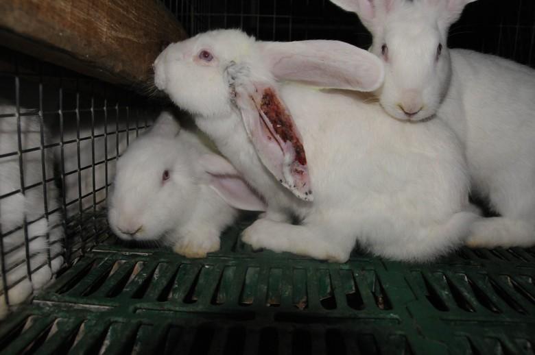 Kaninchenfarm