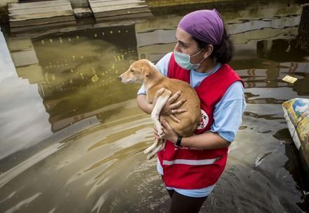 VIER PFOTEN Mitarbeiterin mit gerettetem Hund