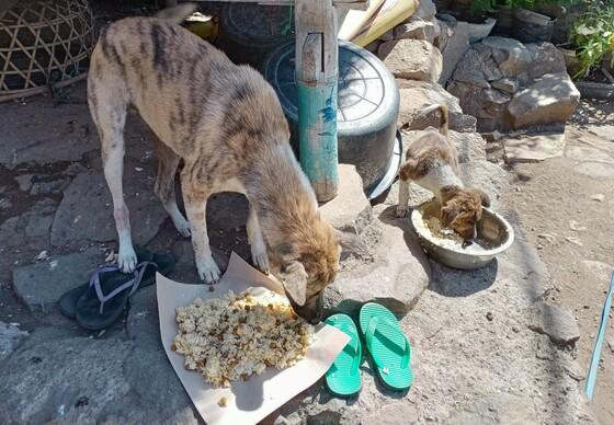 Hongerige hond met haar puppy